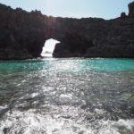 小笠原諸島でイルカと一緒に泳ぐツアーに参加した結果