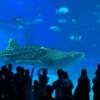 沖縄北部のおすすめ1日観光プランはこれだ!美ら海水族館に古宇利島も網羅